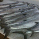 New Orleans Charter Fishing